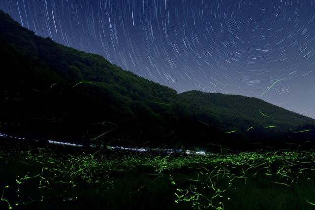 s_松尾峡のゲンジボタル